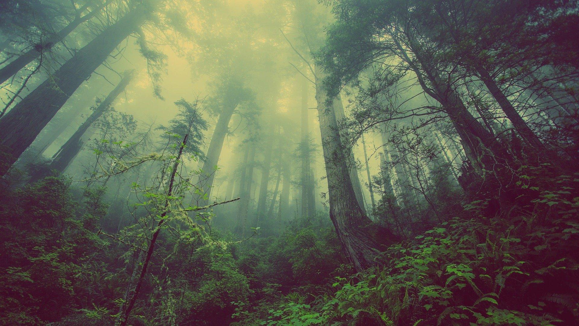 Umbría: tierra de fantasía y magia