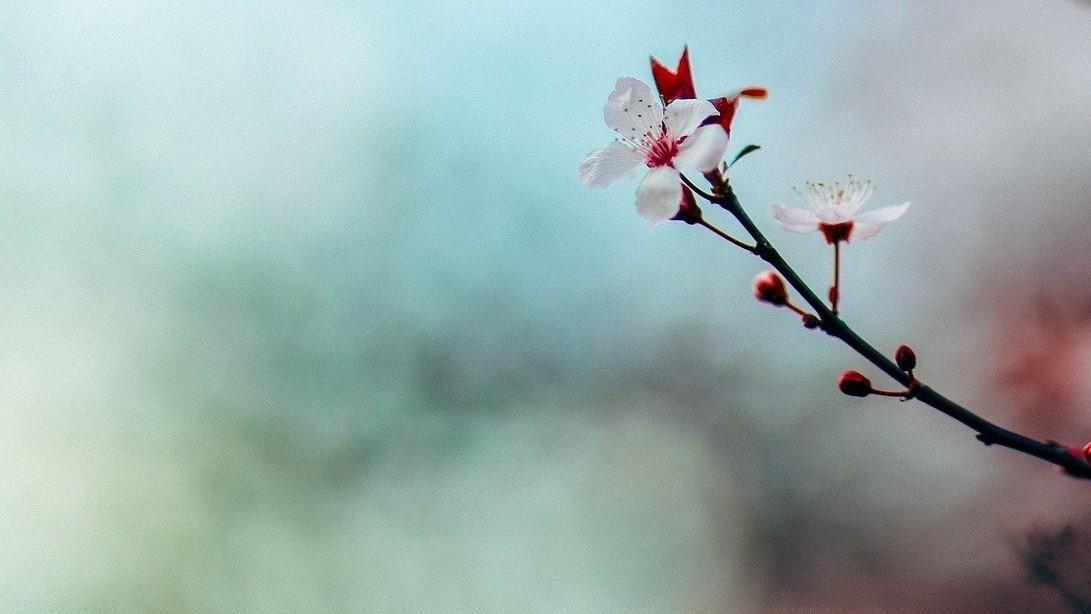 érase una vez primavera